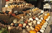 Pumpkins And Squashes Arranged...