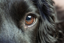 Close Up Of An Eye Of A Dog