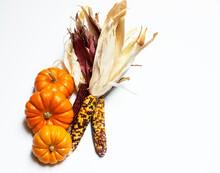 Autumn Still Life Of Mini Pumpkins And Indian Corn Isolated On White Background With Copy Space.