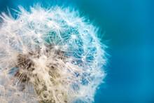 Abstract Dandelion Ball Close-...