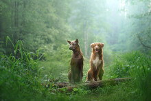 Two Dogs In The Forest. Relati...