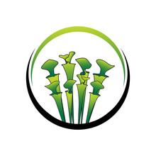 Green Carnivorous Sarracenia Plant Logo Template 02