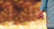 Woman Hand With Red Manicure In Blue Quilted Coat Holds Bright Lush Bouquet Of Dry Autumn Leaves On Blurry Orange Background With Bokeh, Possible Insert Text, Selective Focus