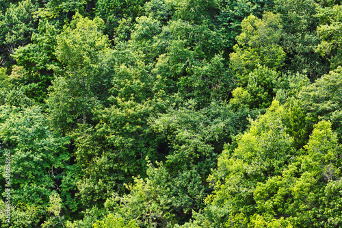 Fototapeta Forest top view background. Green aerial nature texture. Panoramic treetop pattern. Woods from above. obraz