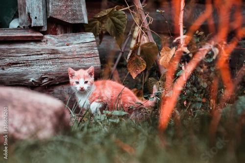 Fototapeta Babykatzen in ländlicher Umgebung