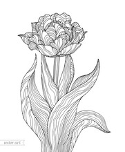 Tulip Flower Isolated. Vector Botanical Illustration. Bohemian Wedding Inwitation Card. Spring Holiday. Coloring Book Page For Adult. Hand Drawn Artwork. Black And White