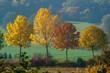 Herbstlaub an Bäumen