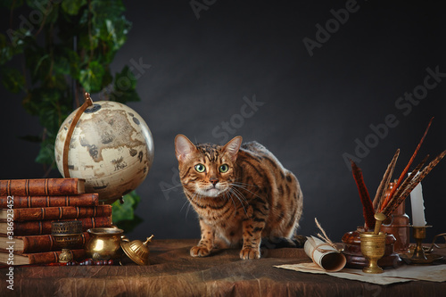 Cuadros en Lienzo Bengal cat, vintage items, books and manuscripts on the table on a dark background