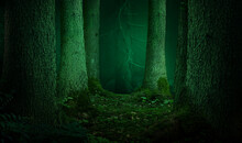 Forest Landscape With Thick Fi...