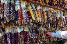 Rows Of Colorful Indian Corn Hanging Together In Bunches For Sale At A Farm Market In Michigan In October