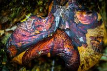Multicolored Mushroom In The F...