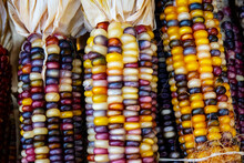 Closeup Hard Indian Corn Kernels Bunched Together For Sale During October For Display And Decoration In October