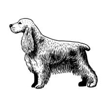 Realistic Cocker Spaniel. Dog ...