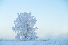 Christmas Landscape With Frost...