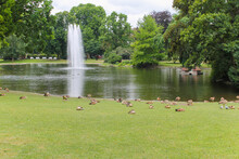 Many Ducks In The Park In Germ...