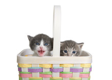 Two Tiny Kittens In A Colorful...