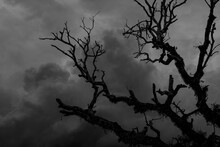 Silhouette Of Tree Branches With Cloud At Midnight, Concept Of Scary And Horror