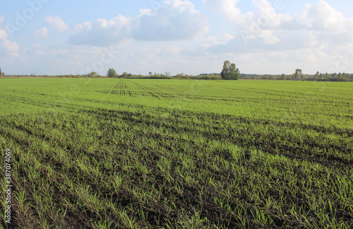 field of plowed land with wheat germ crops agriculture Billede på lærred