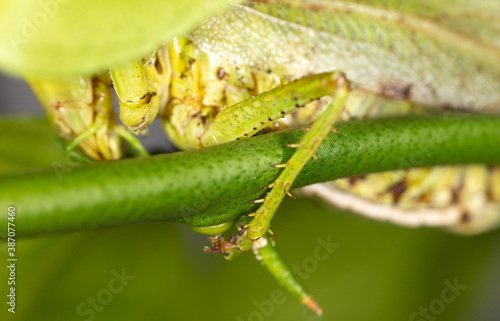 Close-up of the paw of a grasshopper in nature. Canvas Print