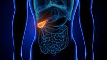 3d Illustration Of Human Internal Organ Gallbladder Anatomy