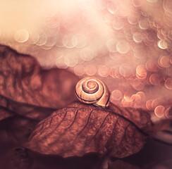 Jesienne liście i muszla ślimaka