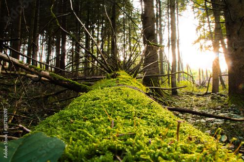 A capture of a fallen tree Canvas