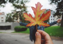 Hand Holding Maple Leaf, A Hap...
