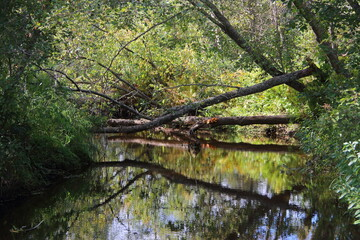 river with fallen trees in the forest