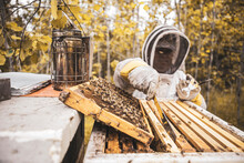 Beekeeper With Bees In Beehive