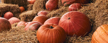 Decorative Pumpkins At Farm Ma...
