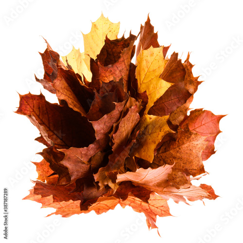 Canvas Print Autumn leaves isolated on white