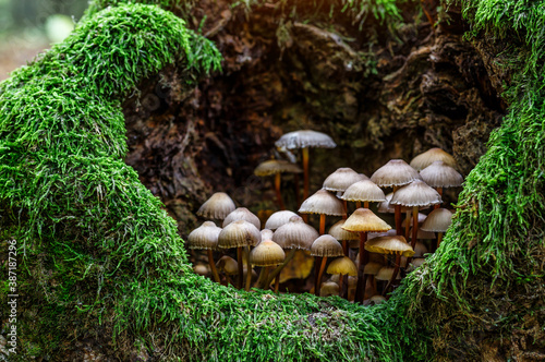Mushrooms False honey fungus on a stump in a beautiful autumn forest Fotobehang