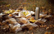 Still Life With Leaves. Autumn...