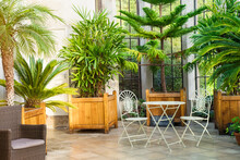 Metal Garden Furniture, Stools And Table Standing In Tropical Plants Orangery With Palms In Wooden Flowerbeds. Relaxing Time In Biophilic Interior Style. Greenhouse Cafe Concept. Copy Space