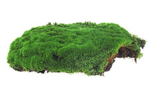 Green Moss Isolated On A White Background, Closeup. Beautiful Green Moss.