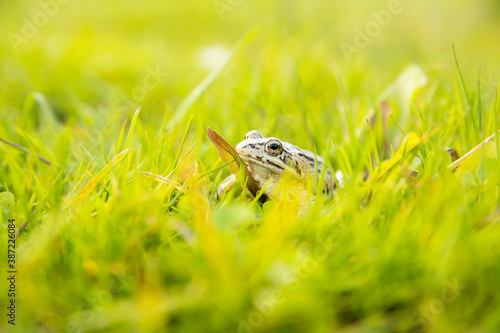 Photo A witty frog sits on the grass under the rays of the sun