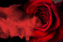Bleeding Red Rose