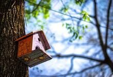 Casa Pajarera En El árbol