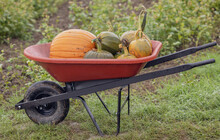 Harvest Wagon Filled With Pumpkins At A Pumpkin Patch In Fall.  Autumn Harvesting Nature Concept.