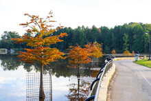 People Walking And Relaxing On A Smooth Paved Winding Bike Trail Near The Lake With Lush Green And Autumn Colored Trees Blue Sky And Clouds At Rhodes Jordan Park At Lawrenceville In Lawrenceville  Key