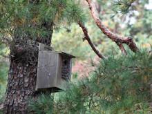 山林の野鳥の巣箱