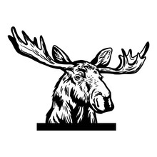 Peeking Moose Head. Original Black White Hand Drawn Pen Art Illustrated Animal Sketch Of Funny Wild Moose Head, Antlers Ear Face Eyes And Nose Isolated On White