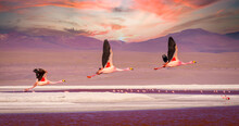 Flamingos Flying Over Laguna C...