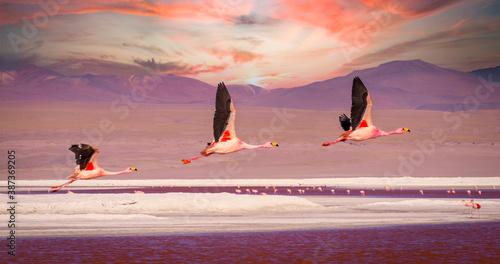 Foto Flamingos flying over Laguna Colorada, Bolivia at sunset