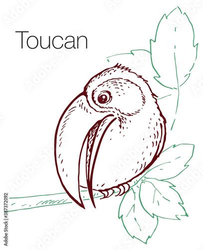 Naklejka premium Toucan hand drawn vector illustration