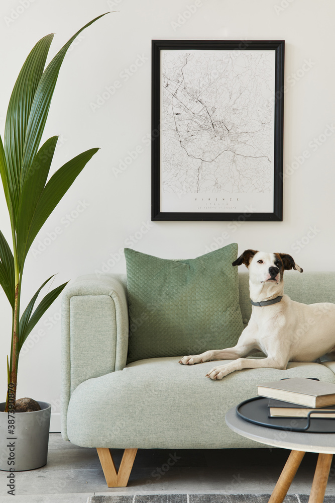 Fototapeta Beautiful dog lying on the green sofa at stylish loft interior with green sofa, design furniture, mock up poster map, carpet, plants and decoration. Template.