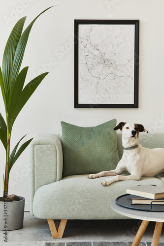 Obraz Beautiful dog lying on the green sofa at stylish loft interior with green sofa, design furniture, mock up poster map, carpet, plants and decoration. Template. - fototapety do salonu