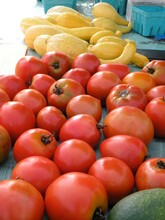 Mostly Ripe Tomatoes With Yellow Gourds