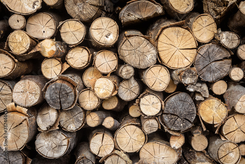 Timber stack, ends of logs for texture background Wallpaper Mural