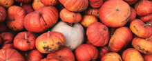 A Lot Of Huge And Mini Decorative Pumpkins At Farm Market. Thanksgiving Holiday Season And Halloween Decor. Autumn Harvers, Fall Natural Texture Orange Background